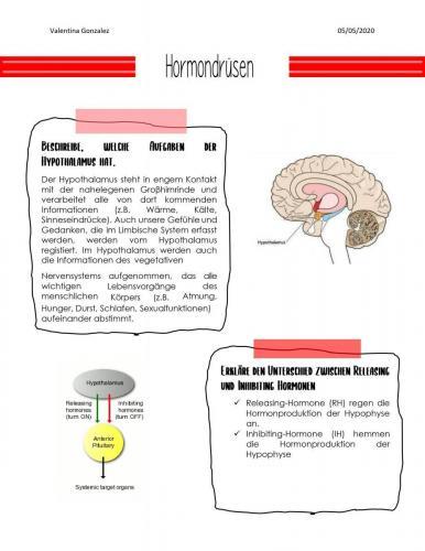 Hormondrüsen 1