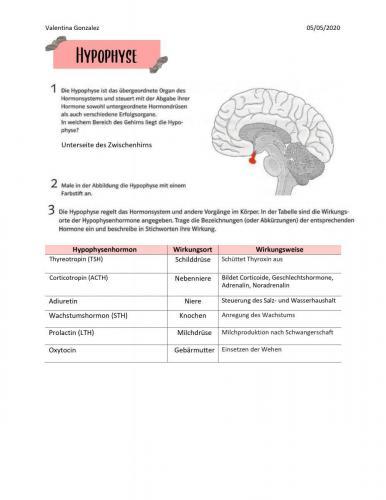 Hormondrüsen 3